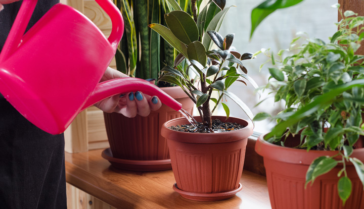 Watering plant while your away